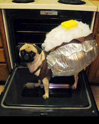 Baked-Pug-tato-Dog-Costume