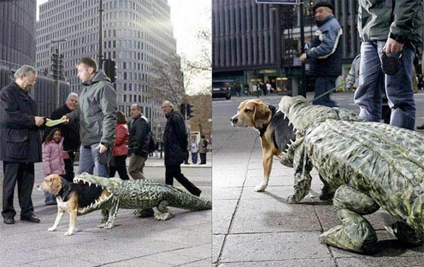 Dog Eaten By Alligator Costume - CostumePop