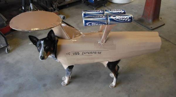 Enterprise-Dog-Costume