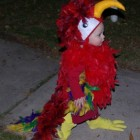 The Cutest Parrot Costume Ever! Costumes