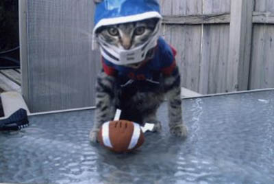 quaterback-cat-football-player-costume
