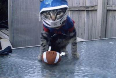 quaterback-cat-football-player-costume