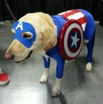 Captain Ameridog Cosplay at Special Edition NYC 2014