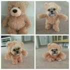 Dog Teddy Bear Costume