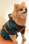 Hachi Corp Costumes - Legend of Zelda Side - CostumePop