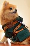 Hachi Corp Costumes - Legend of Zelda Side 2 - CostumePop